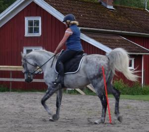 få häst att gå upp i vikt